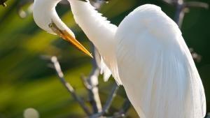 فلوريدا البرية صورة