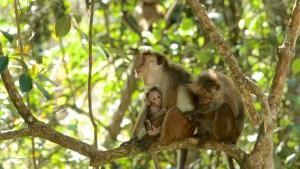 Sri Lanka Wonders photo