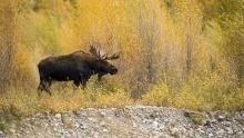Yellowstone svelata programma