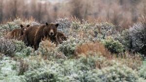 Yellowstone Uncovered photo