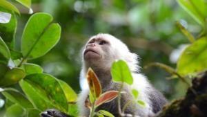 Fauna colombiana foto