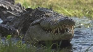 Crocpocalypse photo
