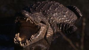 Croc Ganglands photo