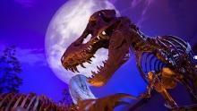 T. rex Fossils show