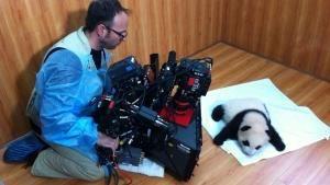 Il panda e l'uomo foto