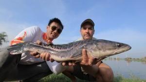 Frankenfish photo