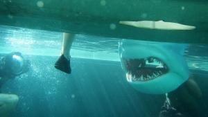 Shark Danger photo