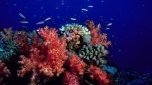 Underwater Paradise show