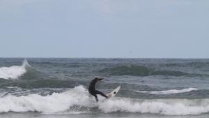 Sharkfest photo