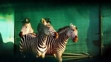 Magical Gorongosa show