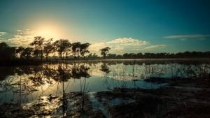 Magical Gorongosa photo