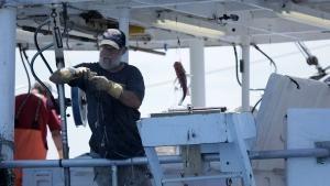 Fishing on Action photo