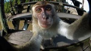 Cutest Selfies photo