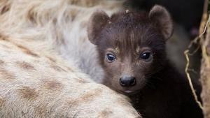 Baby Animals photo