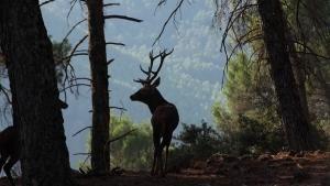 إسبانيا البرية صورة