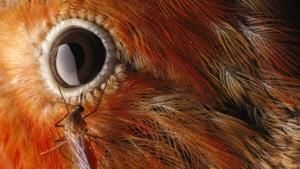 Science behind the Eye photo