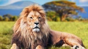 Wild 24: Africa's Savananh photo