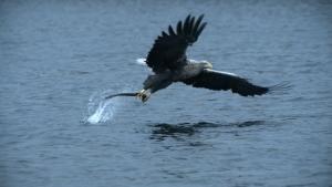 The Eagles photo