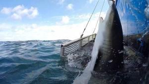 Amazing Sharks photo