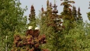 التشبث بالحياة في آلاسكا صورة