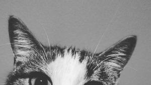 #NGChallenge: Gatti foto
