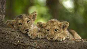 Magnificent Wildlife photo