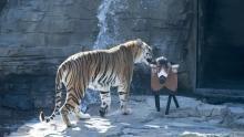 Big Cat Specials show