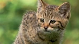 خاص: القطط الكبيرة صورة