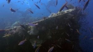 Relics under the Sea photo
