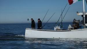 التونة ذات الزعانف الزرقاء صورة