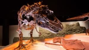 Dinosaurs: Amazing Beasts photo