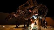 الديناصورات : وحوش رائعة برنامج