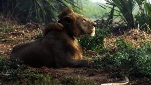 إعادة الحياة لمملكة إفريقيا البرية صورة