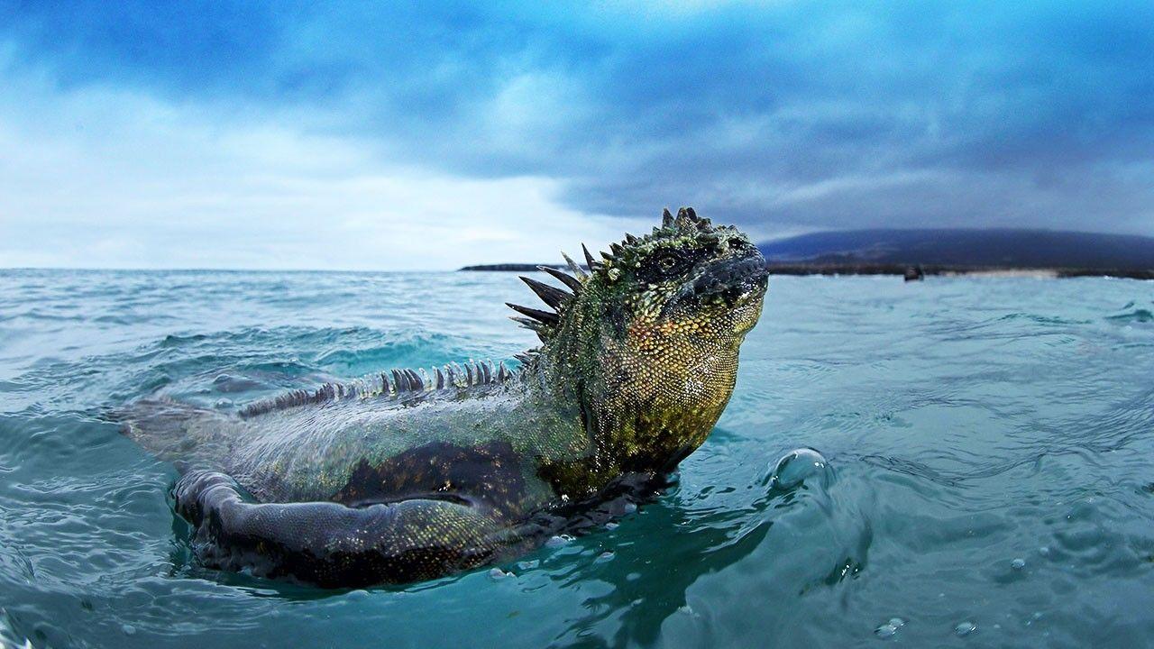 Картинки по запросу Galapagos Islands