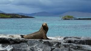 Galapagos Islands photo