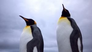 Falklands photo