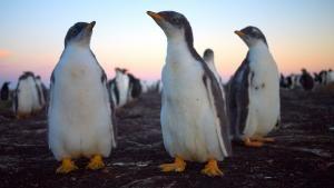جزر الفوكلاند صورة