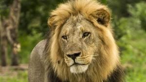 The Jungle King photo