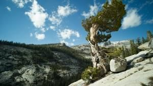 America's National Parks photo