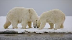Gates of The Arctic photo