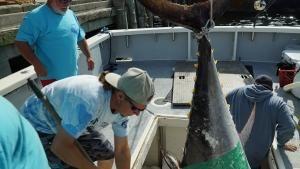 الصيد الأخير صورة