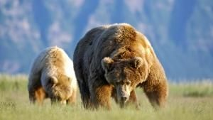 Majestic Meat-eating Predators photo