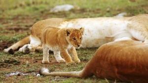 Big Cat Specials photo
