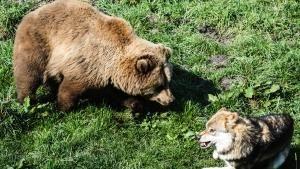 نادي قتال الحيوانات صورة