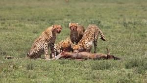 Pride: Rulers At Risk photo