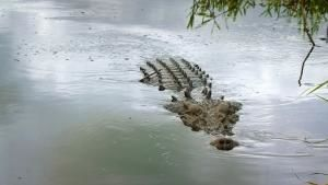 Big Crocs photo