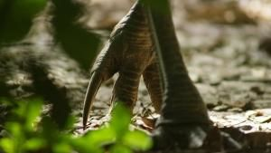 Prehistoric Look photo