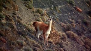 Argentinean Wildlife photo