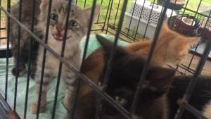 Animal Storm Squad photo