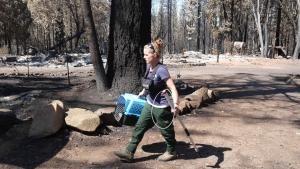 California Burning photo